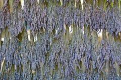 Grupos secados de suspensão de flores da alfazema imagens de stock