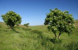 grupowi drzewa Zdjęcie Royalty Free