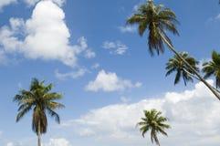 grupowi drzewka palmowe Obrazy Stock