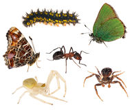 grupowi insekty odizolowywali biel Zdjęcia Royalty Free