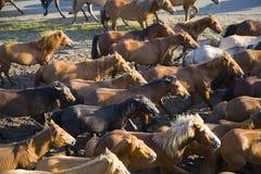 grupowi konie Zdjęcia Royalty Free