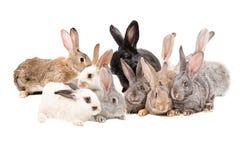 Grupowi króliki Obraz Royalty Free