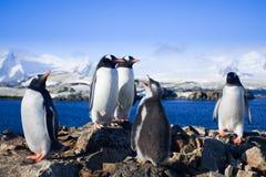 grupowi pingwiny Zdjęcia Royalty Free