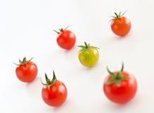 grupowi pomidory Zdjęcie Royalty Free