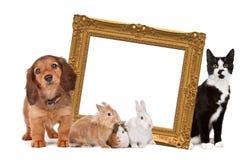grupowi zwierzęta domowe Fotografia Stock