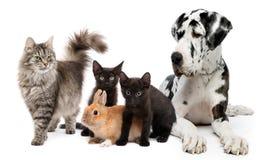 grupowi zwierzęta domowe Zdjęcia Royalty Free