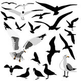 grupowy seagull Fotografia Stock