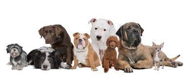 Grupp av åtta hundar Royaltyfri Foto