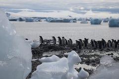 Grupp av adeliepingvin på kanten för vatten` s royaltyfri fotografi