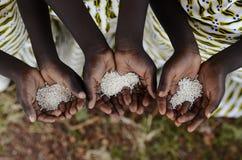 Grupp av afrikansvartbarn som rymmer risundernäring Starva arkivfoton