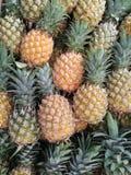 Grupp av ananasfrukt Fotografering för Bildbyråer