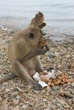 Grupp av apor på lunch Arkivfoto
