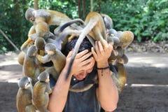 Grupp av apor som anfaller en man arkivbild