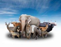 Grupp av asia djur Arkivbild