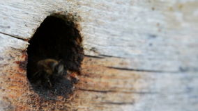 Grupp av att flyga för honungsbin stock video