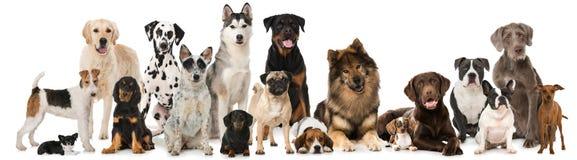Grupp av avelhundkapplöpning royaltyfria foton