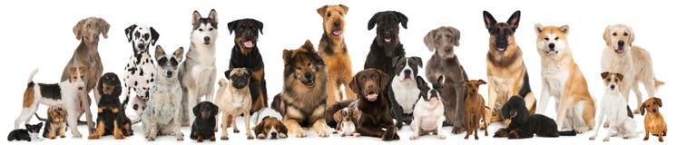 Grupp av avelhundkapplöpning Arkivfoton