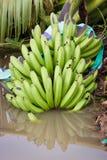 Grupp av banananas som är stupade till jordningen Royaltyfri Foto