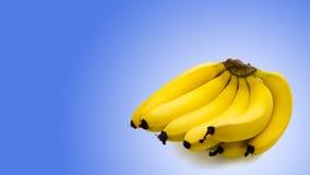 Grupp av bananer som isoleras på blå bakgrund Fotografering för Bildbyråer