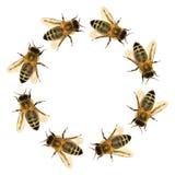 Grupp av biet eller honungsbit i cirkeln royaltyfri bild