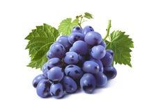 Grupp av blåa druvor med isolerade sidor royaltyfri bild