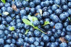 Grupp av blåbär Arkivbild