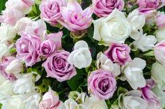 Grupp av blommabakgrund Arkivbilder