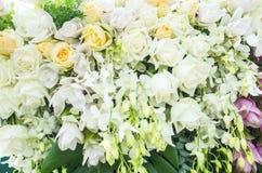 Grupp av blommabakgrund Royaltyfri Bild