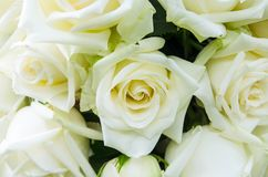 Grupp av blommabakgrund Royaltyfria Foton