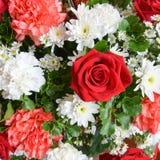 Grupp av blommauppsättningen för bakgrund Royaltyfri Bild