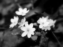 Grupp av blommor Royaltyfria Foton