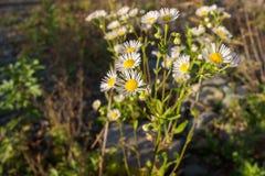 Grupp av blommor i gångbana Arkivfoto
