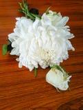 Grupp av blommor i trädgårds- /decoration Arkivfoto