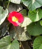 Grupp av blommor i trädgårds- /decoration Fotografering för Bildbyråer