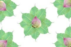 Grupp av bo-blad och lotusblomma på vit bakgrund arkivbild