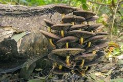 Grupp av champinjoner som växer på en inloggning skogen royaltyfri bild