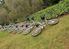 Cyklar på en lawn arkivbilder