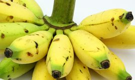 Grupp av damen Fingers Banana Royaltyfri Foto