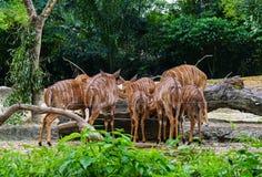 Grupp av deers som matar på zoo Arkivbilder
