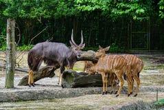 Grupp av deers som matar på zoo Fotografering för Bildbyråer