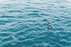 Grupp av delfin i det öppna havet vietnam för Stillahavs- seascape för fartyghav tropisk sikt arkivfoto