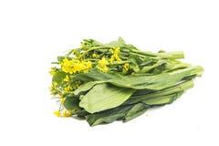 Grupp av den blom- choy summagräsplangrönsaken som är populär bland bergskammen Royaltyfri Bild