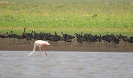 Grupp av den glansiga ibits Royaltyfria Foton