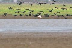 Grupp av den glansiga ibits Fotografering för Bildbyråer