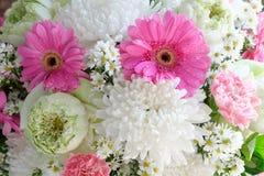 Grupp av den härliga blomman Arkivfoton