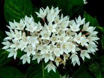Grupp av den härliga lilla blomningen för vita blommor royaltyfria bilder