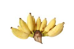 Grupp av den kultiverade bananen som isoleras på vit bakgrund Arkivbild