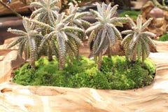 Grupp av den mycket lilla kokospalmen royaltyfri foto
