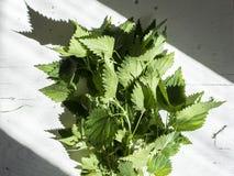 Grupp av den nya organiska gröna nässlan på den vita tabellen Royaltyfri Fotografi