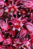Grupp av den nya roselleblomman Arkivbild